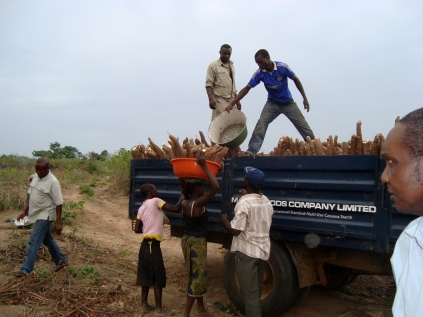 A truck belonging to a starch production company Midas Foods in Akure, Ondo state loading cassava from a 35 hectare community