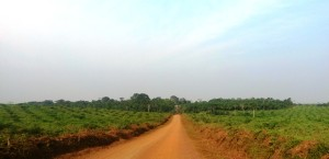 "Jumbu village, an ""island"" surrounded by oil palm"