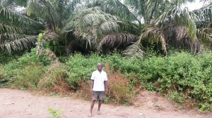 Kassay Sima Mattia and his plantation