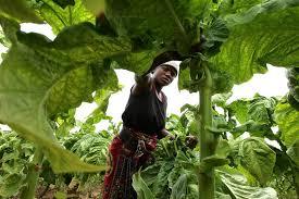 Liberia  foncier
